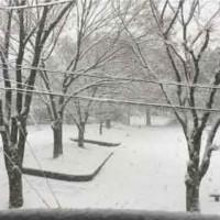 雪の公園2